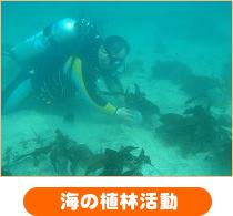 海の植林活動