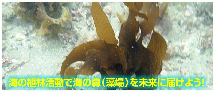 海っ子の森 イメージ